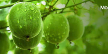 Best Natural Alternative for Sugar: Monk Fruit